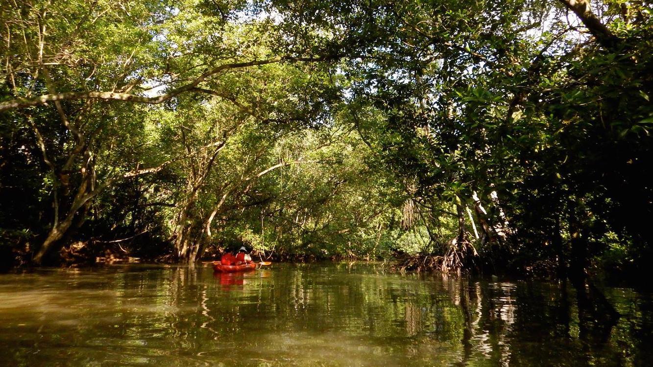 Sungei Khatib Bongsu mangroves